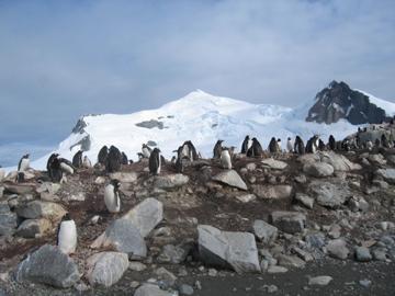 2006-2-antartica 089
