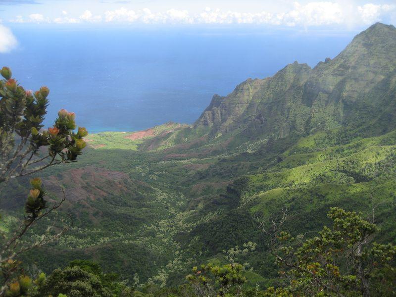 View from Pihea Trail Kauai